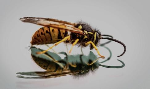 ポイズンリムーバーとは?虫刺されに使える毒吸引器は屋外活動のときに持っておきたい!